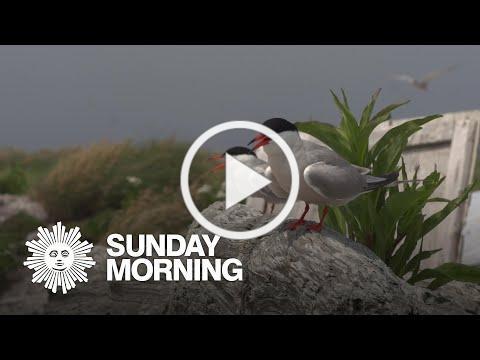 Sharing quarantine with endangered seabirds