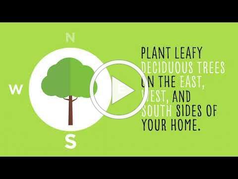 Plant Energy Savings