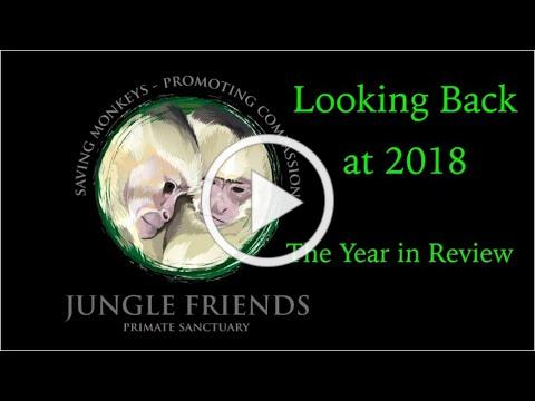 Jungle Friends: 2018 Year in Review