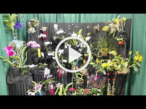 2018 SEPOS orchid show