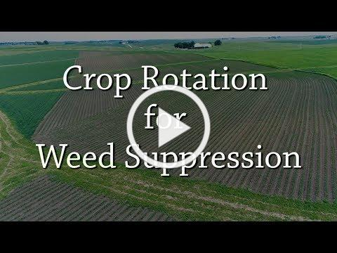 Crop Rotation for Weed Suppression - Organic Weed Control