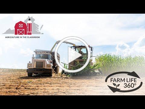 Farm Life 360º - Virginia Corn Chopping