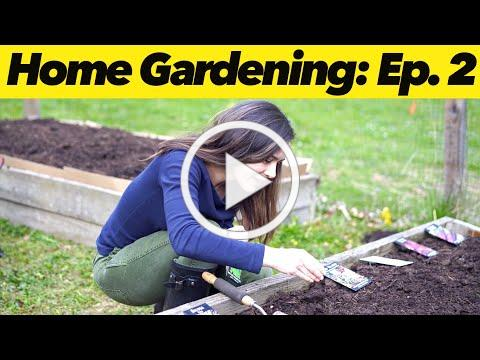 How to Start Seeds   Home Gardening: Ep. 2
