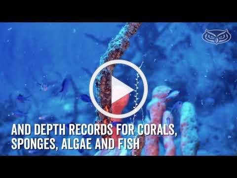 FAU Researchers Uncover Majesty in Cuba's Reefs
