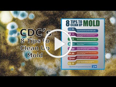 8 Tips from the CDC to Clean Up Mold