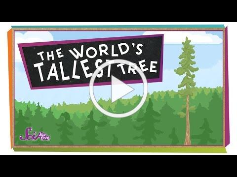 The World's Tallest Tree! | Science for Kids