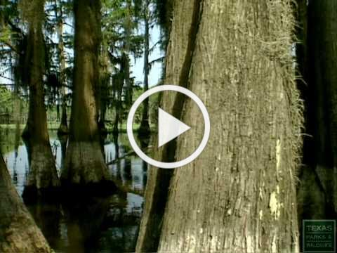 Caddo Lake State Park, Texas [Official]