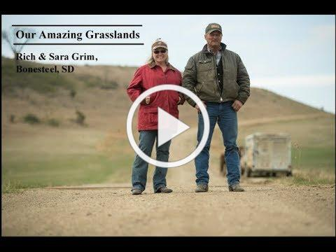 Our Amazing Grasslands- Grim Ranch