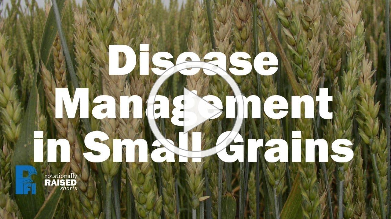 Disease Management in Small Grains