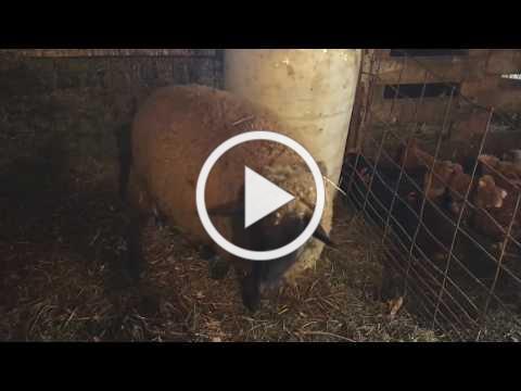 Lambing Season - Part 1