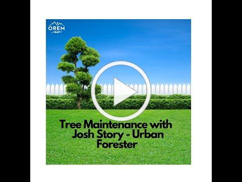 Tree Maintenance Tips from Orem City's Urban Forester