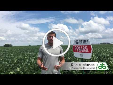 New Soybean Variety P29A85L
