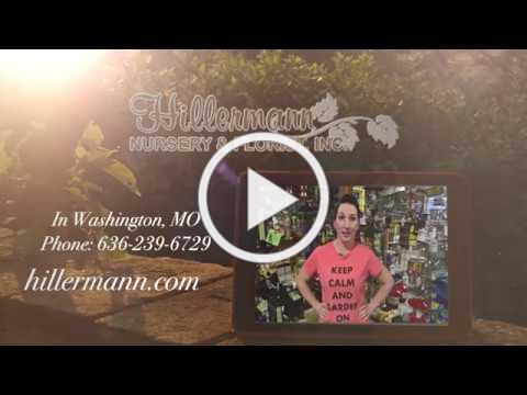 Wild Bird Habitat Video