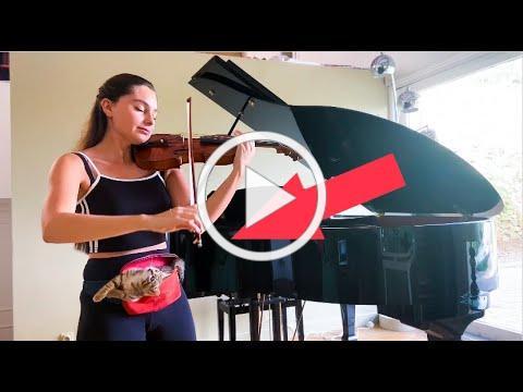 Violin Practice With Kitten