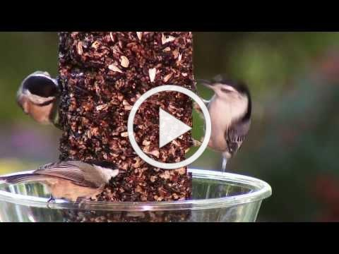 Wild Birds Unlimited - Birds Enjoying our Feeders (Part 2)