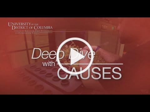 Deep Dive with CAUSES Series #1