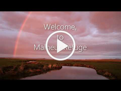 Introducing the Malheur Symphony - A Wildlife Photography Experience