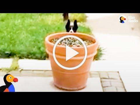 Dog Hides Behind Flower Pot to Stay Outside Longer   The Dodo