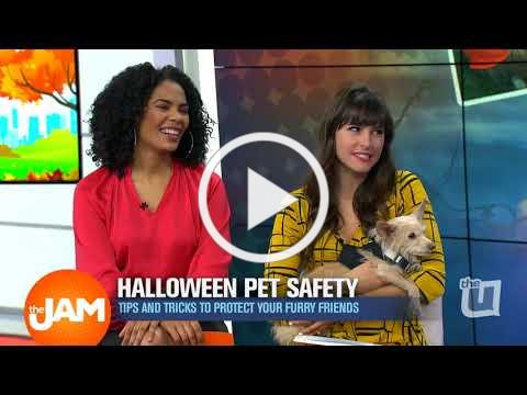 Steve Dale and Halloween Pet Safety on the U