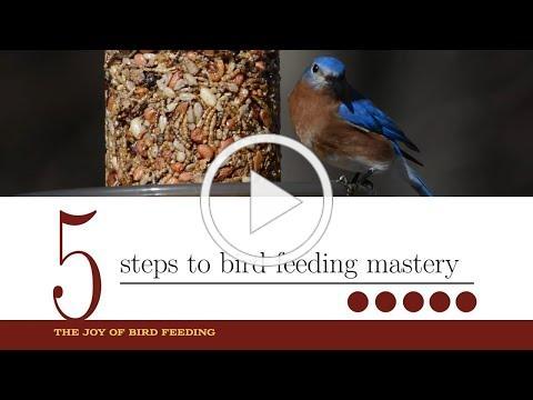 The Joy of Bird Feeding - 5 Steps to Bird Feeding Mastery