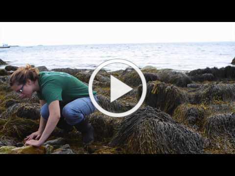 Marine Environmental Science: high school student experience