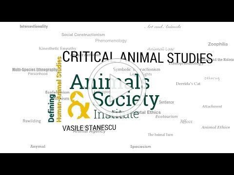 Defining Critical Animal Studies with Vasile Stanescu - ASI's Defining Human-Animal Studies 38