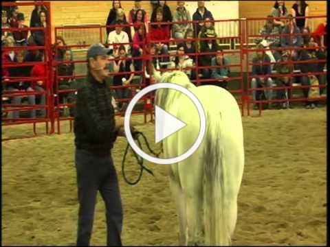 Jim Masterson Demos at Horse Expos
