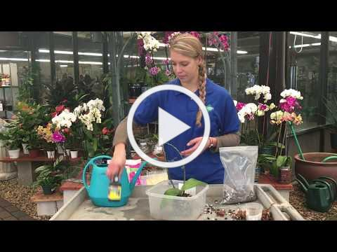 How to: Repotting Orchids