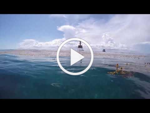 Research Footage of Sargassum, Floating Brown Seaweed