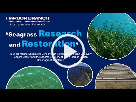 Virtual Tour: Seagrass Research and Restoration at FAU's Harbor Branch