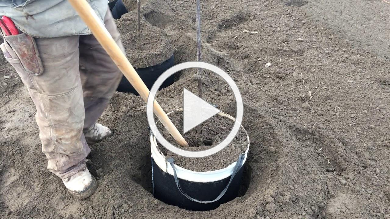 Planting Trees 2020 at Urban Forest Nursery, Inc.