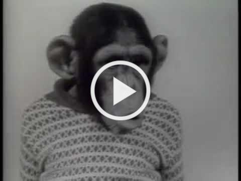 Chimpanzee - Xerox 914 - Xerox Commercial