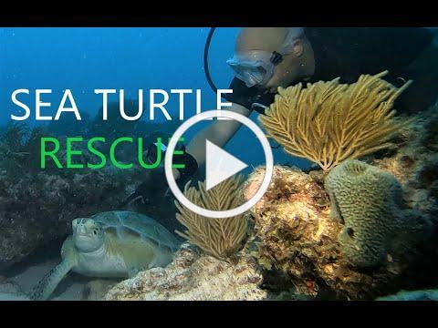 Night Time Sea Turtle RESCUE MISSION!!!