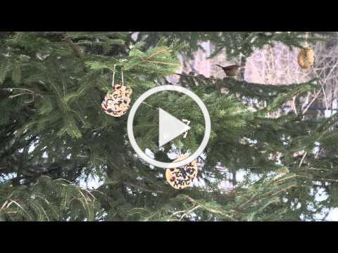 How Cool is That! - Decorate a Tree