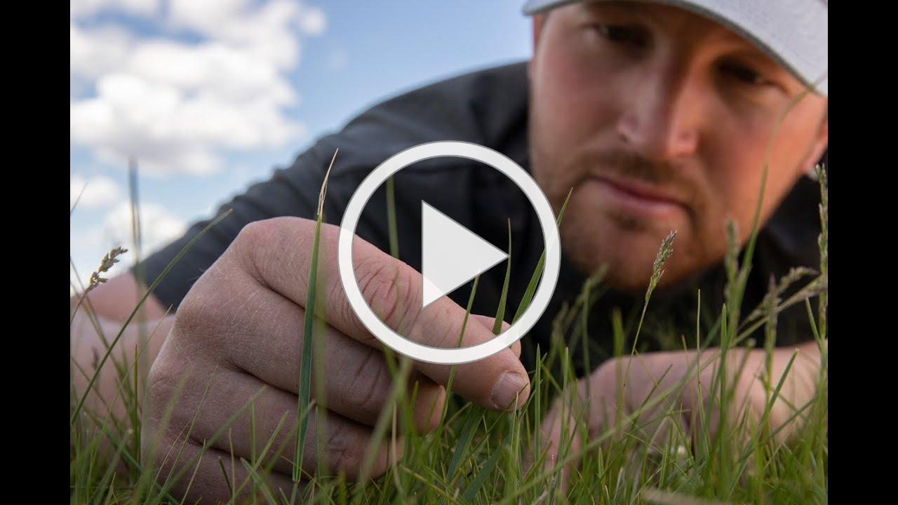 Our Amazing Grasslands ~ Lance Vilhauer | May 2020