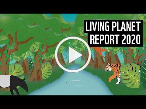 Living Planet Report 2020 | WWF