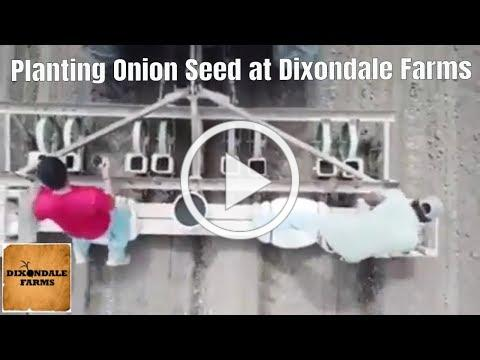 Planting Onion Seed at Dixondale Farms