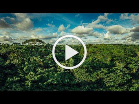 Amazing Congo, Wildlife Works Mai Ndombe REDD+ project. Film by Create The Change
