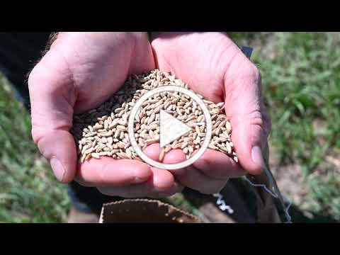 Cost Share Opportunities For Damaged Corn Acres