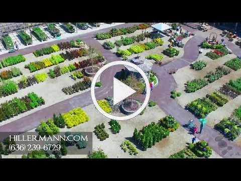 Hillermann 1 Video 4 18