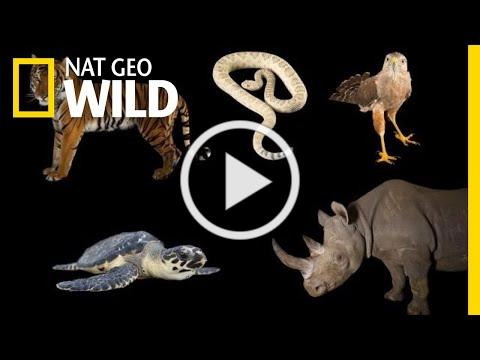 Meet Some of the World's Most Endangered Animals