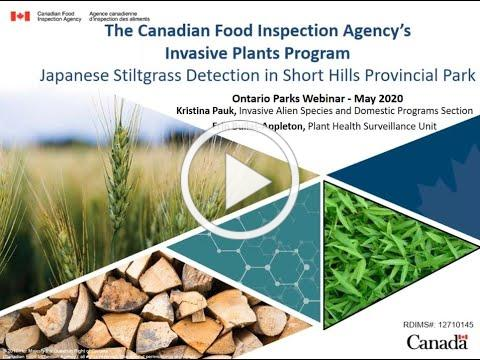 Japanese Stiltgrass Detection in Short Hills Provincial Park