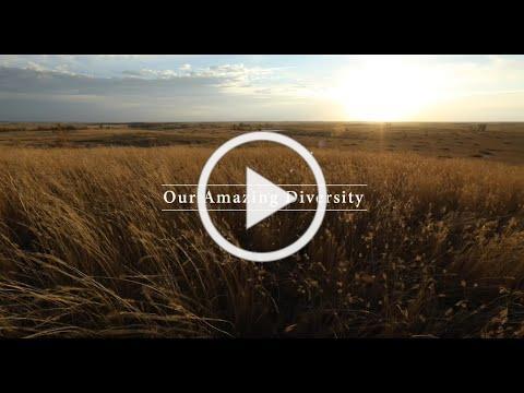 Our Amazing Diversity ~ Bryan Jorgensen, Ideal, SD