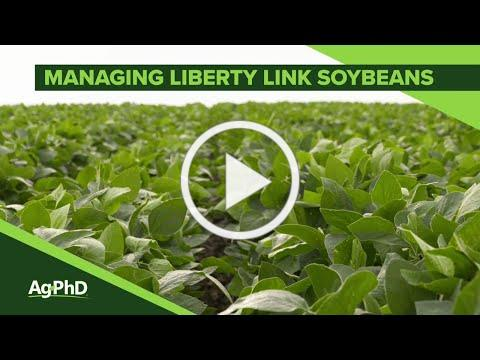 Managing Liberty Link Soybeans #1086 (Air Date 1-27-19)