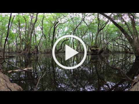 Enter the SWAMPS with this 360 VR View!