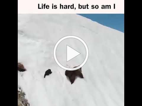 Life is hard, But so am i