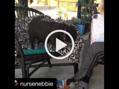 Watch Nebbie welcom home her New Bummlies!