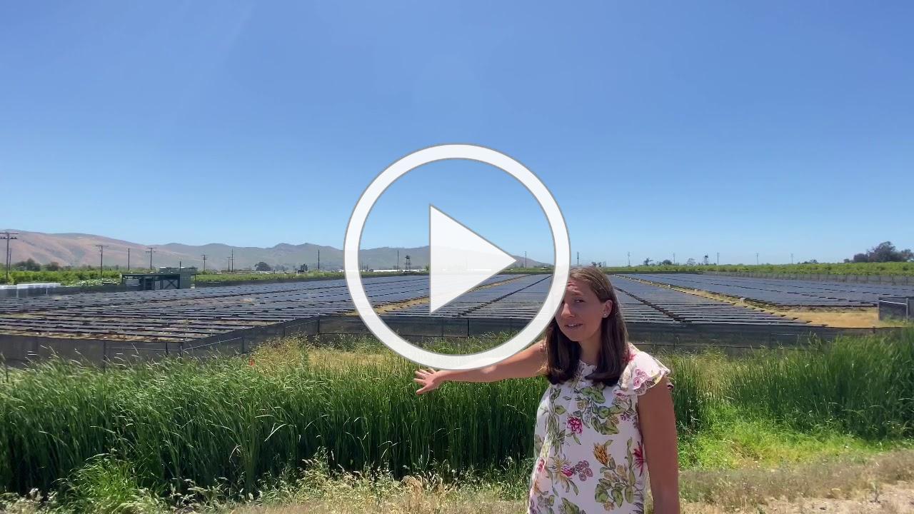 Limoneira Solar Grove Field Trip