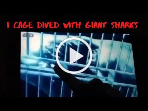 Cove Dweller Video 2