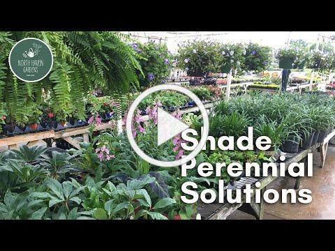 Shade Perennial Solutions